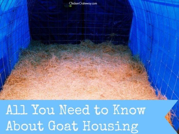 Goat Housing Tips | ChickenGateway.com