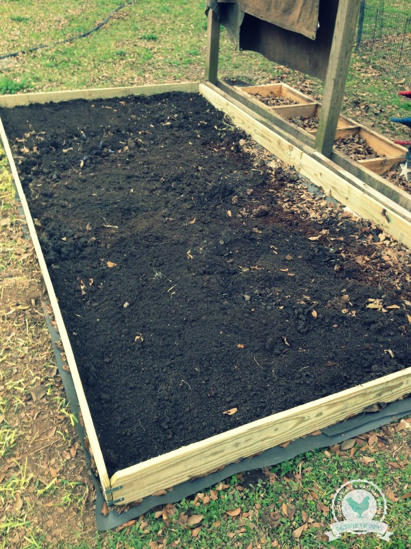 Cheap Raised Vegetable Garden Beds - ChickenGateway.com