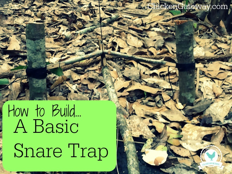 how to build a snare trap