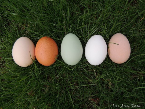 coloredeggs