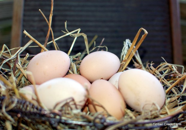 eggs-timber-creek-farm