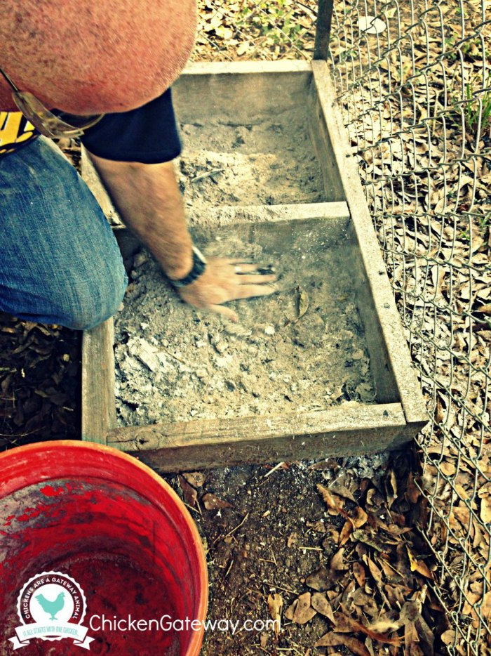 Building a Chicken Dust Bath | ChickenGateway.com