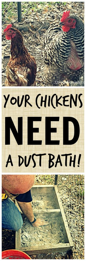 Chicken-Dust-Bath-Pinterest-Small