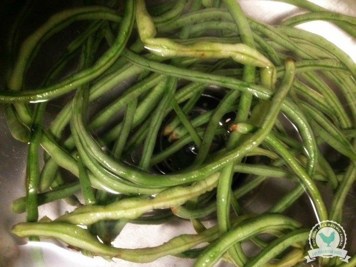 Freezing Green Beans | ChickenGateway.com
