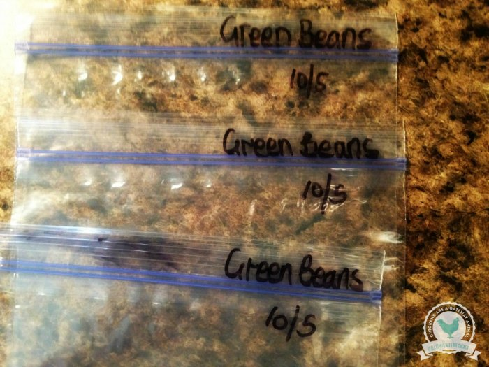 how-to-freeze-green-beans-5